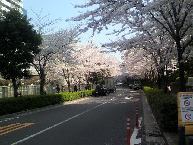桜~(^-^)b_e0157359_165177.jpg