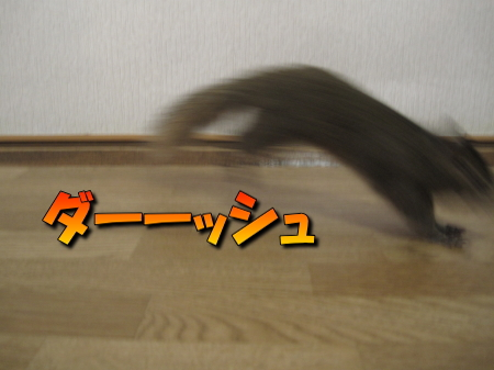 a0015164_11222967.jpg