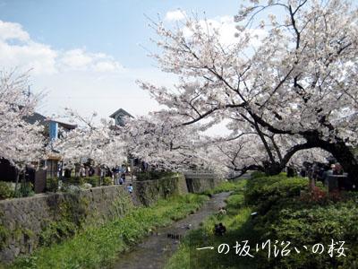 09年お花見~_c0150273_20233544.jpg
