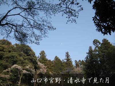 09年お花見~_c0150273_20255533.jpg