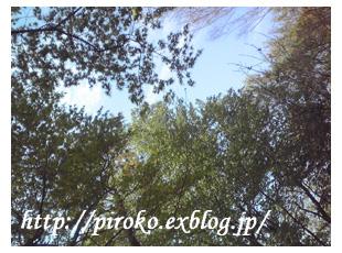 b0010775_15164391.jpg