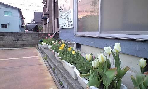 春ですね~!_c0092877_1362736.jpg