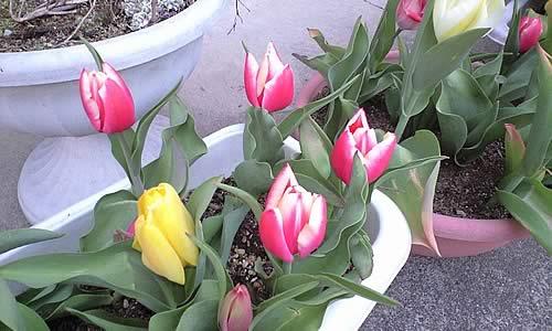 春ですね~!_c0092877_1363829.jpg