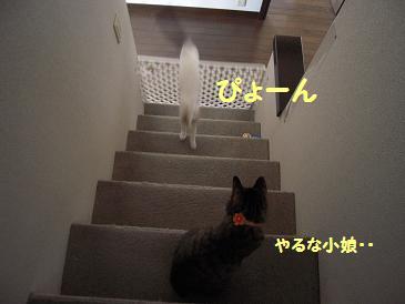 c0139488_0305327.jpg