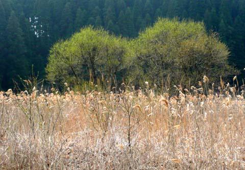 柳の木の芽吹き!_f0150893_21563040.jpg