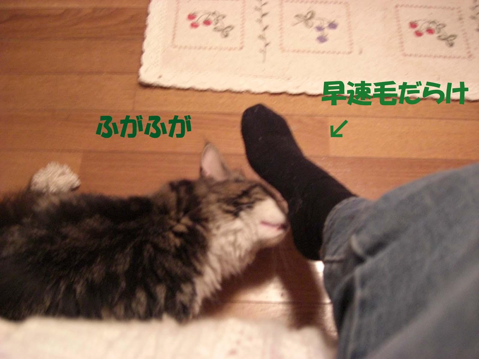 f0180799_11155023.jpg