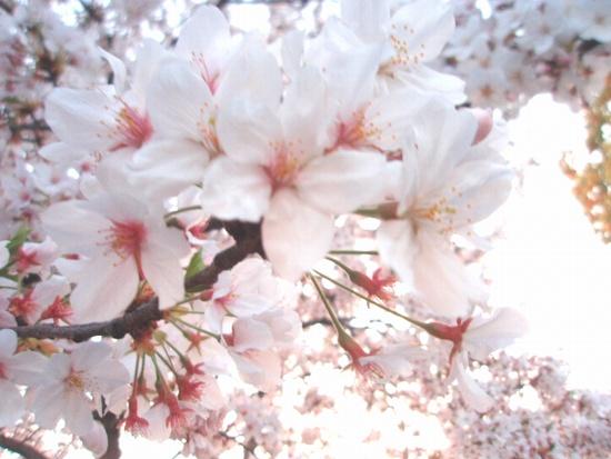 花より団子(京都賀茂川)_c0027701_14245139.jpg