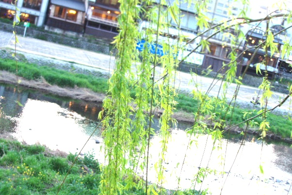 花より団子(京都賀茂川)_c0027701_1428053.jpg