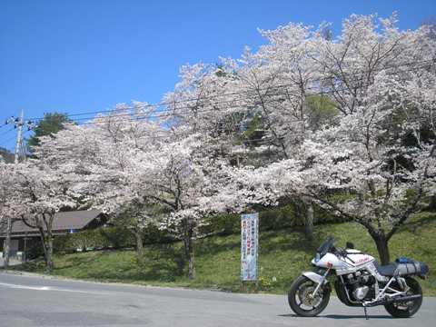 秩父の桜_d0115409_22102130.jpg