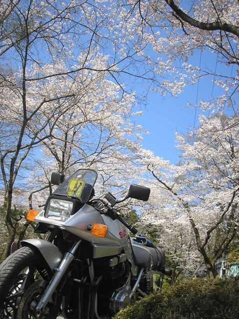 秩父の桜_d0115409_22121292.jpg