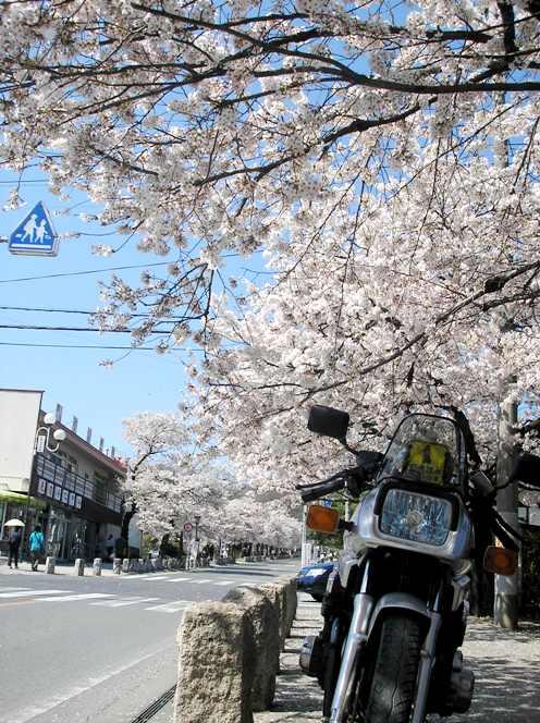 秩父の桜_d0115409_22125722.jpg