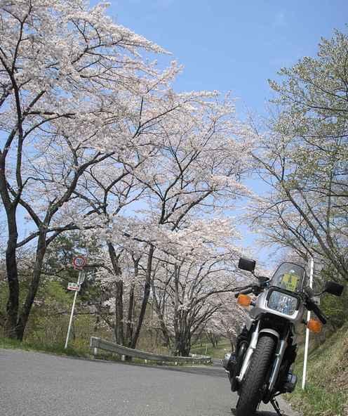 秩父の桜_d0115409_22152384.jpg