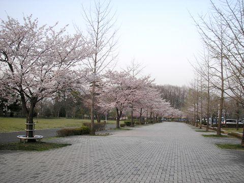 秩父の桜_d0115409_22595862.jpg