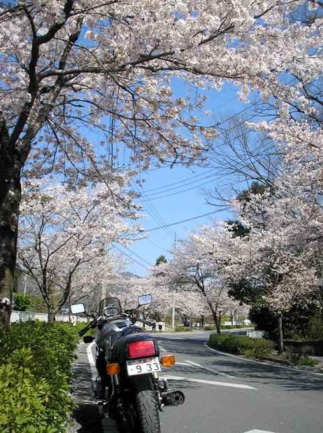秩父の桜_d0115409_23272588.jpg