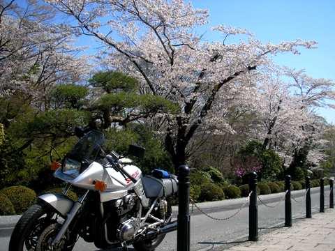 秩父の桜_d0115409_2328569.jpg