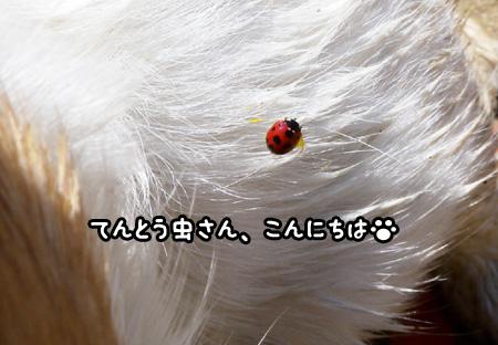 f0129214_15141674.jpg