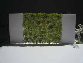 緑のカーテン_c0198232_2353580.jpg