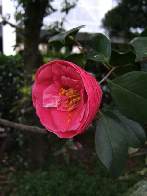 春の花2_e0089232_21112638.jpg