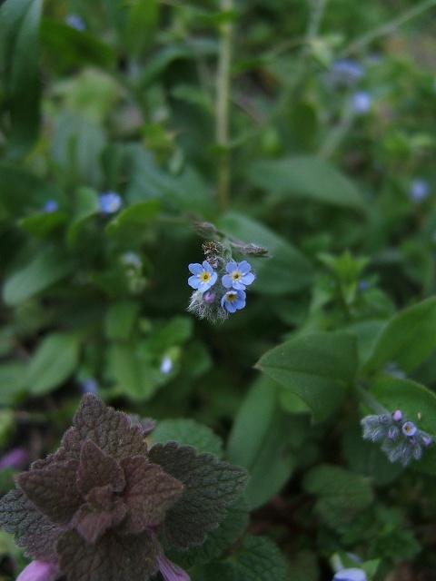春の花2_e0089232_2195331.jpg
