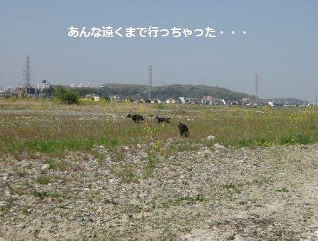 b0148945_2014167.jpg