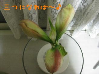 b0151748_13214437.jpg