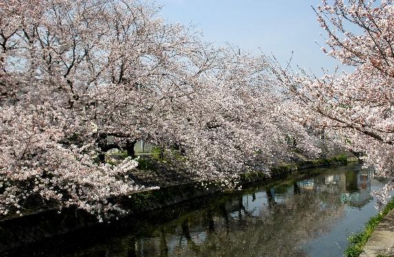 春爛漫_b0093754_0114540.jpg
