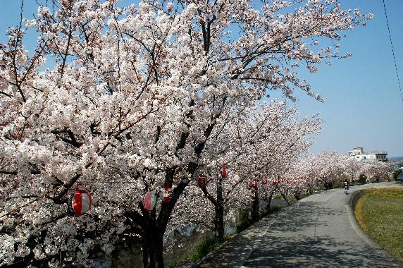 春爛漫_b0093754_0115680.jpg
