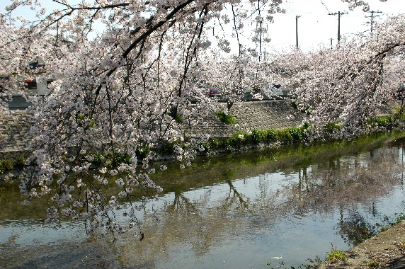 春爛漫_b0093754_0122237.jpg