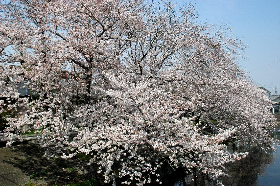 春爛漫_b0093754_0123042.jpg