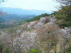 櫻狂い(2) ~一目千本・吉野の櫻~_b0102572_9552021.jpg