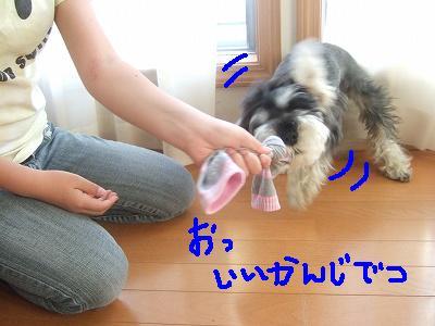 b0143879_165359.jpg