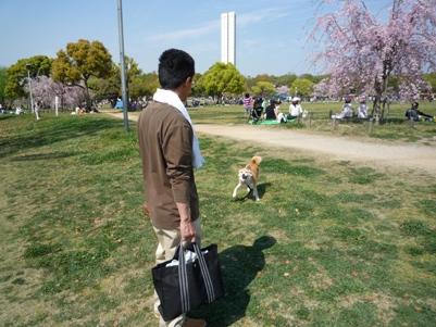 大仙公園でプチ花見~♪_e0123286_18254954.jpg