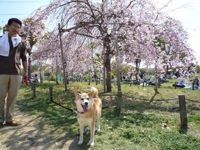 大仙公園でプチ花見~♪_e0123286_18264129.jpg