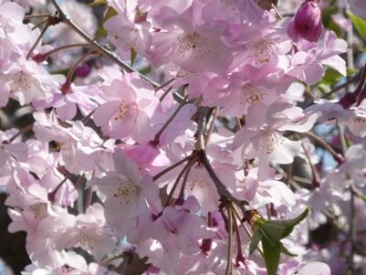 大仙公園でプチ花見~♪_e0123286_18305236.jpg