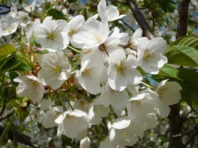 大仙公園でプチ花見~♪_e0123286_18313737.jpg