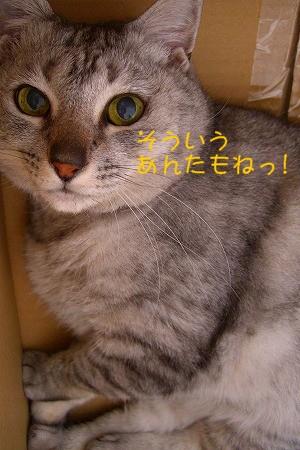 d0005397_045742.jpg