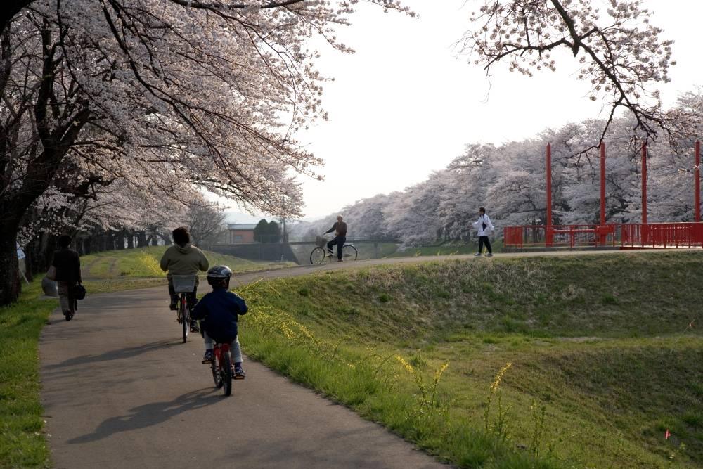 堰と桜_b0074098_7243085.jpg