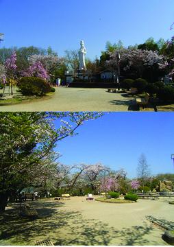 虎渓山永保寺から春をお届けします。_f0073301_17131232.jpg