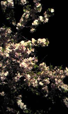 f0173605_1913855.jpg
