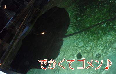 f0075006_1521372.jpg
