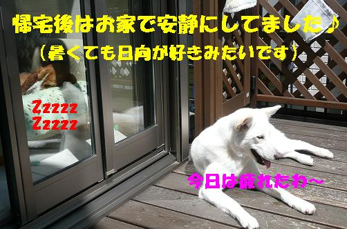 f0121712_22472438.jpg
