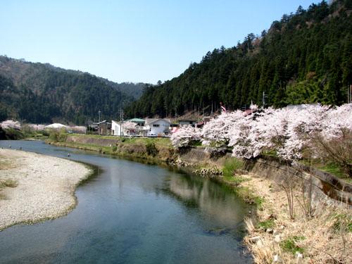 由良川上流花盛り_e0048413_21421825.jpg