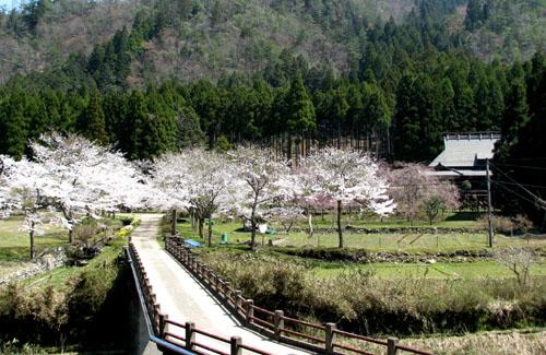 由良川上流花盛り_e0048413_21431241.jpg