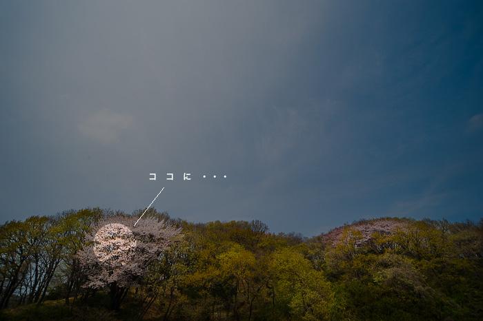 SHUTOKO_e0117517_230304.jpg