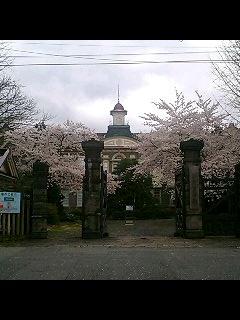 桜満開_d0009833_2356914.jpg