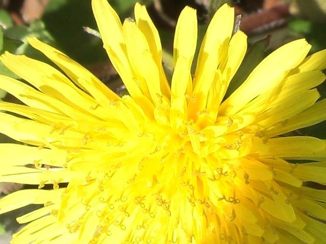 春 花盛り。_e0054438_1843079.jpg