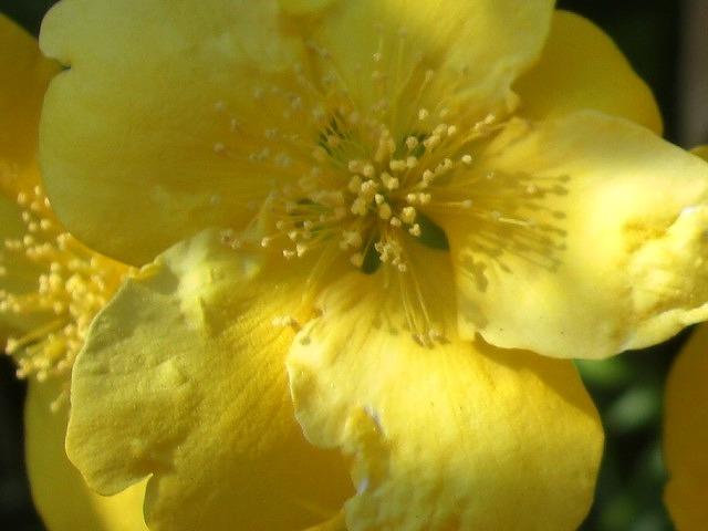 春 花盛り。_e0054438_18435172.jpg