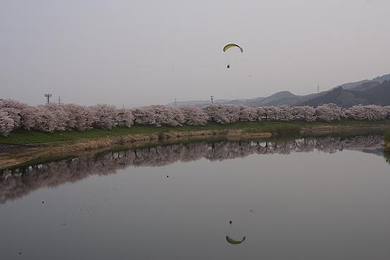 東北桜巡りその1・宮城白石一目千本桜_e0165983_1416616.jpg