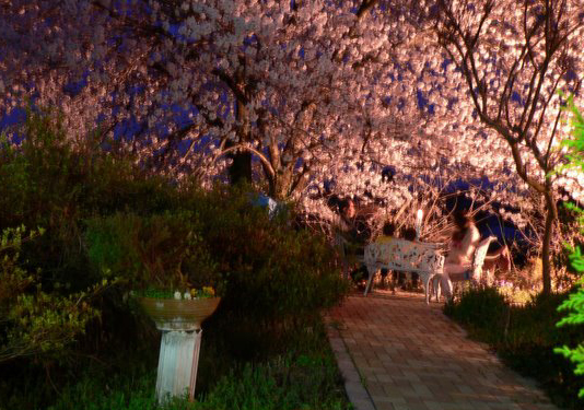 Dinner under the Cherry blossoms - 桜の下でディナー -_f0186787_1328939.jpg