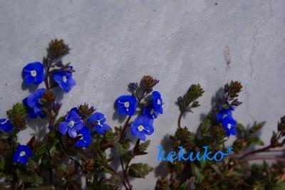 f0170524_1453566.jpg